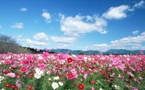 Field-flowers-image3